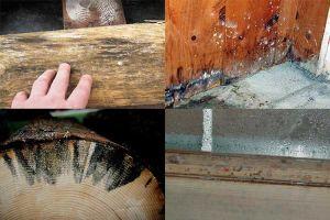Чем обработать древесину от плесени и грибка