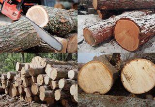 Сколько весит древесина